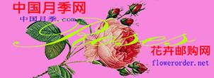 中国月季网社区
